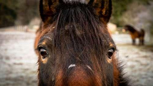 Horse Portrait Face Free Photo