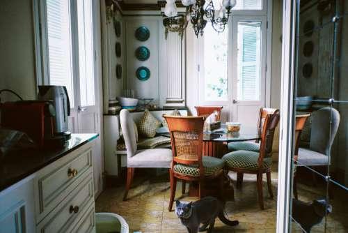 Cat Walks Through Dining Room Photo