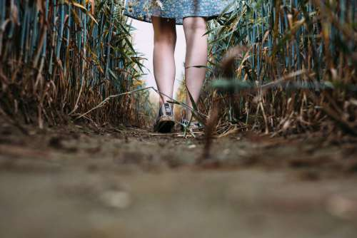Girl standing in a triticale field 4