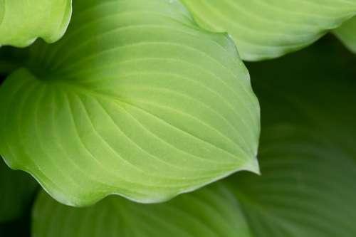 Macro Plant Leaf