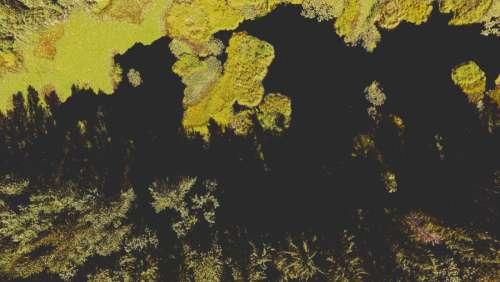 Wetland Marsh Aerial