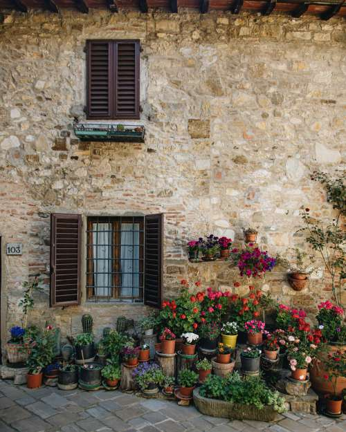 Countless Plants In A Courtyard Photo