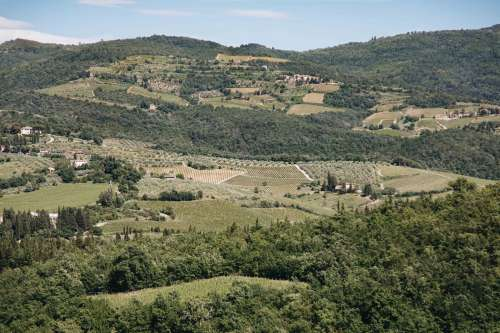 Houses And Vineyards Scattered On Hillside Photo