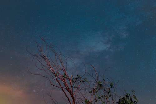 Night Sky Over Red Trees In Setting Sun Photo