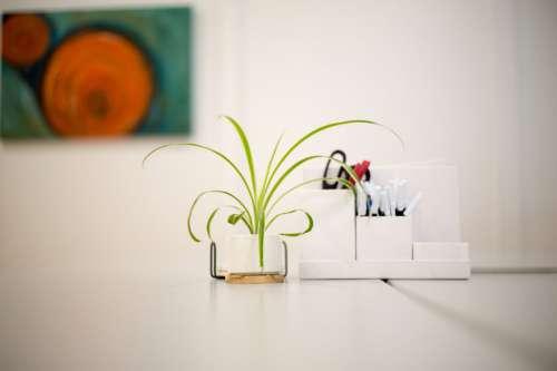 House Plant Desk