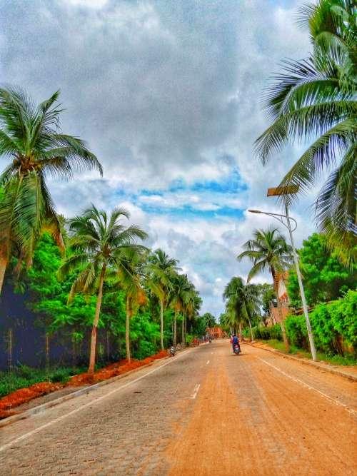 landscape, trees, road, circulation, transport, flora, nature, environment, cobblestone