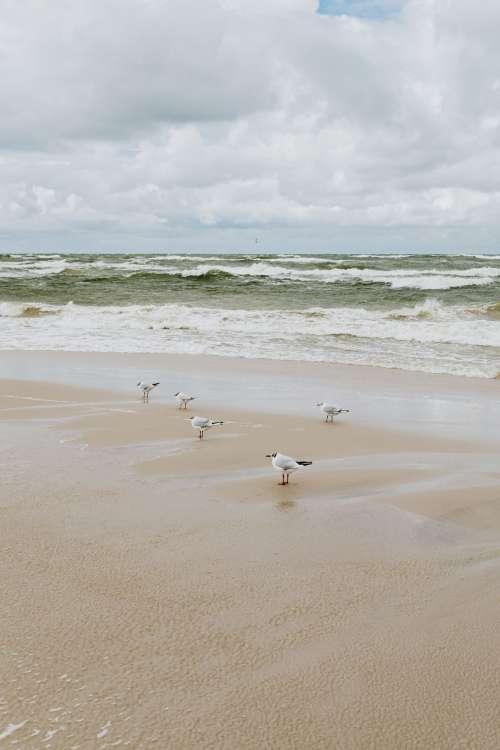 Seaside backgrounds