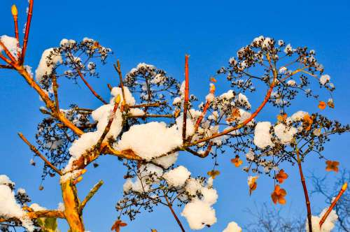 Flowers With Snow With Blue Sky