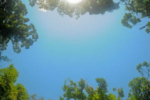 Trees Bordering A Clear Blue Sky