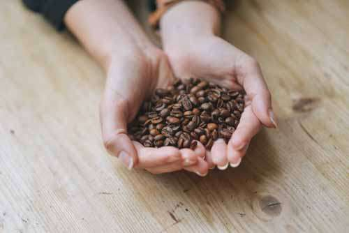 Woman's Hands Holding Roasted Coffee Beans