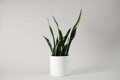 Minimalist Houseplant On Grey Background Photo