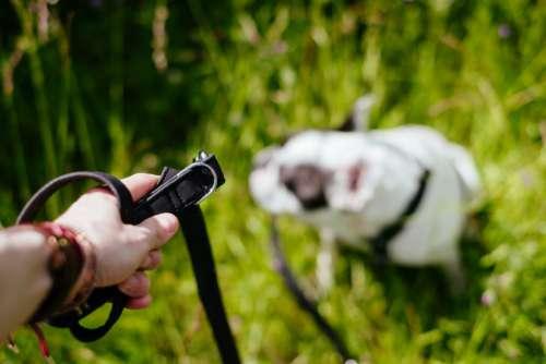 Female hand holding a dog leash