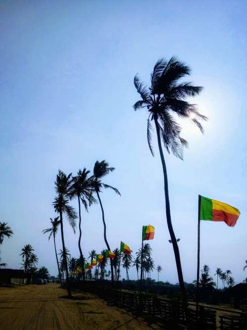 beach, tree, sky, palm tree, sun, summer, nature, environment, landscape, flags
