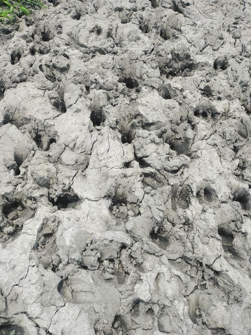 dry mud, earth, muddy sand, black and white