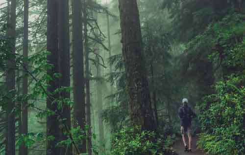 Man Walking Through Green Forest With Mist