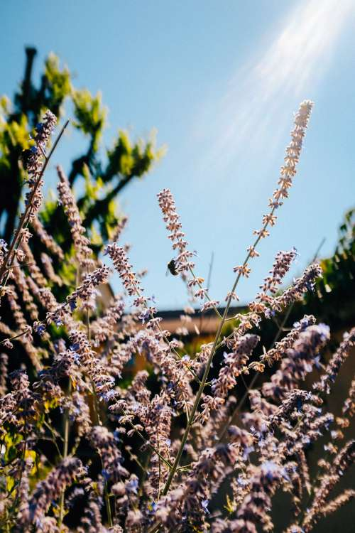 Rays Of Light On Purple Flowers Photo