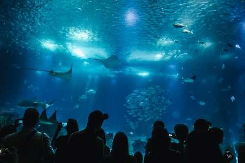 Silhouettes In An Aquarium Photo