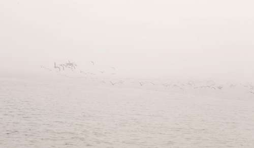 Birds On Cloudy Waters Photo
