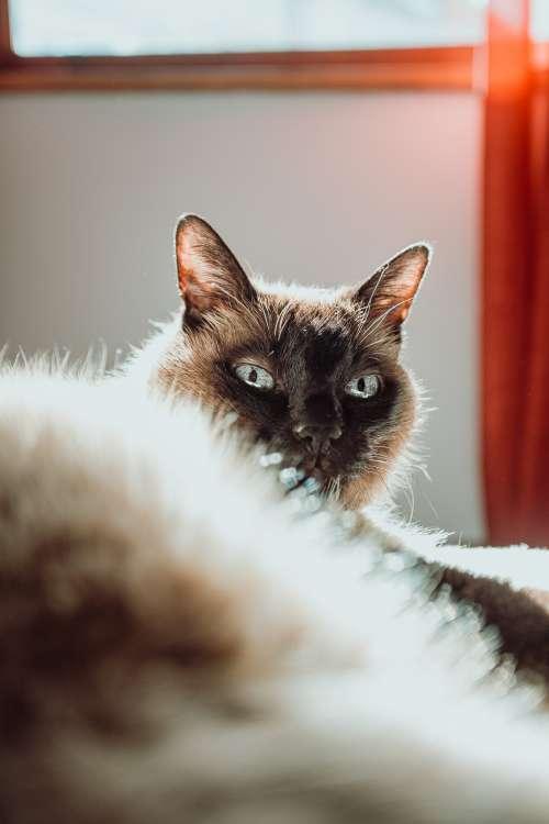 Cat Models In Sunlight Photo