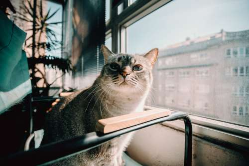 A Cat Stares At You Photo