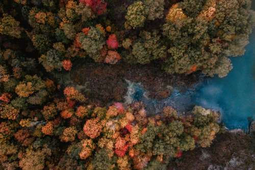Fall Forest Opens Out To Blue Lake Photo