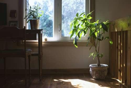 House Plant Enjoys Natural Light Photo