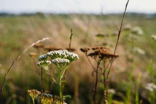 Wild flowers meadow 3
