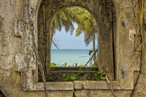 people, nature, environment, window, sea, palm trees