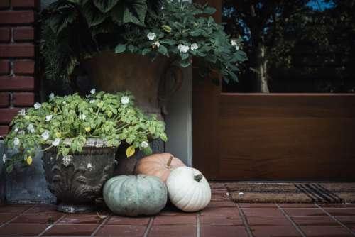 Exterior Pumpkins Flowers Free Photo