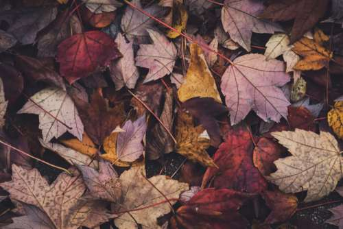 Autumn Leaves Background Free Photo