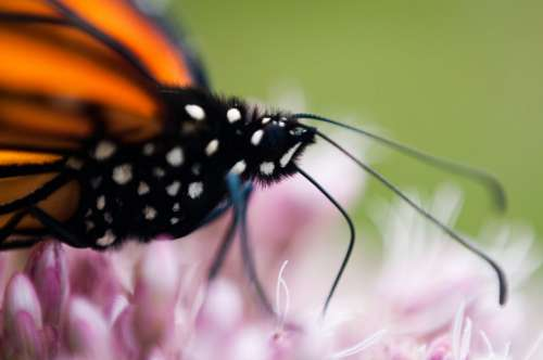 Butterfly Close up Free Photo