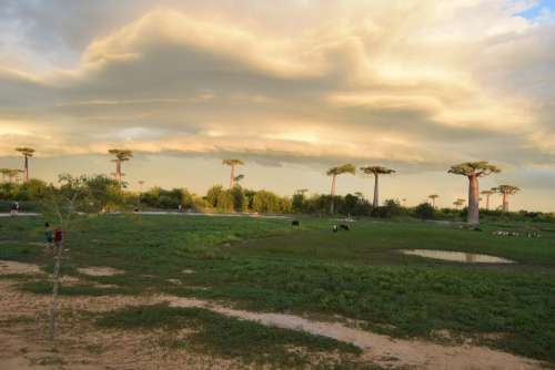 baobab, environment, nature, beautiful landscape, cloud, bush, forest, grass, pasture, people, animal, greenery, green spaces, lowland, ecology