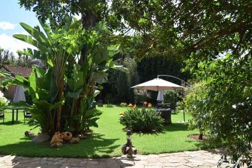landscape, villa, green space, tree, magnificent house plan, garden, vegetation, outdoors, furniture, lawn, plant, vase, straw hut