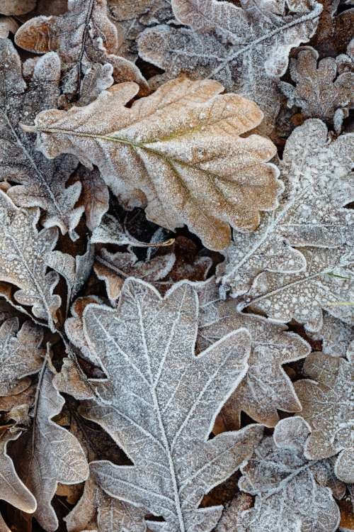 Morning frost on plants