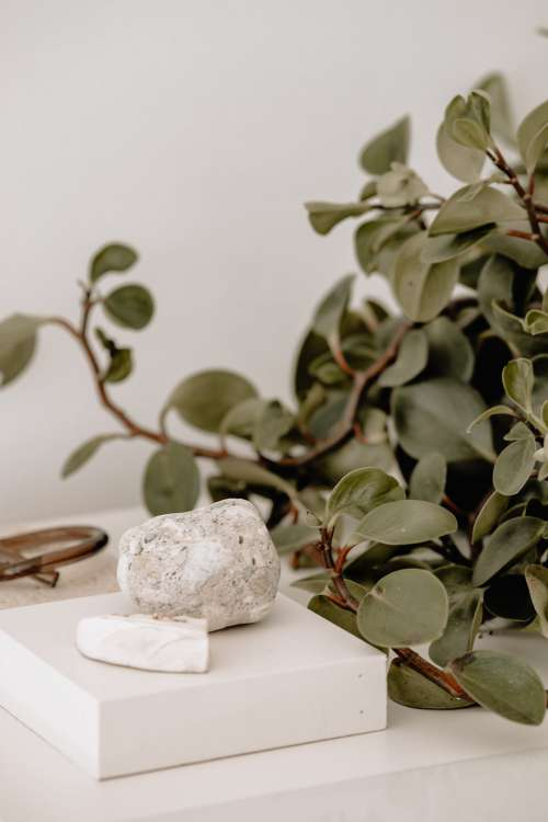 Green Plant And White Stone On Table Top Photo