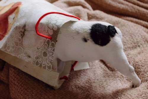 French Bulldog puppy hiding in a gift bag