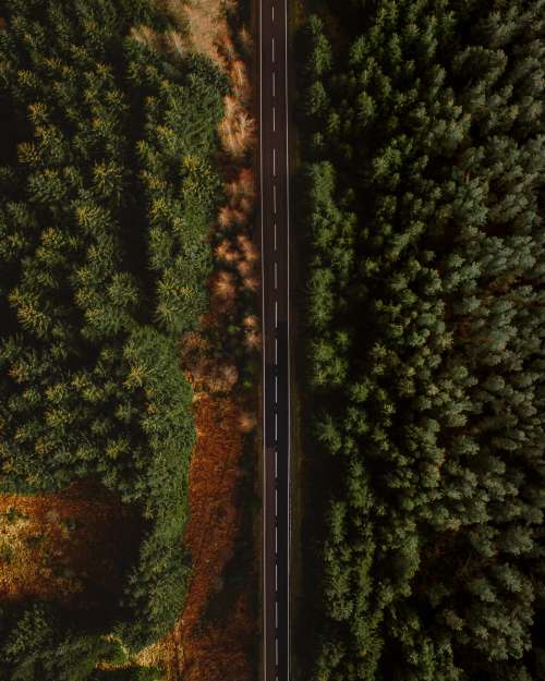 Aerial Photo Of Paved Road Surrounded By Trees Photo