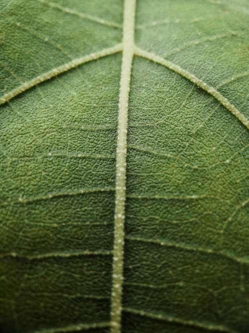 Macro Photo Of A Veiny Green Leaf Photo