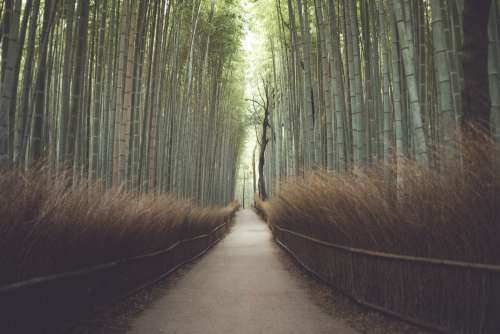 Pathway Through A Bamboo Forest Photo