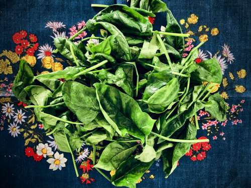 Washed spinach on kitchen towel