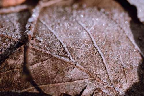 Frosted leaf closeup 4