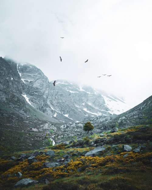 Birds and mountains