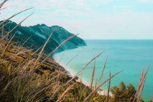 Wild Grass On An Ocean Coastal Range Photo