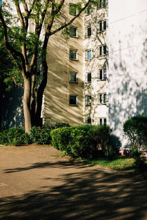 Apartment Building And Tall Trees Creating Shadows Photo