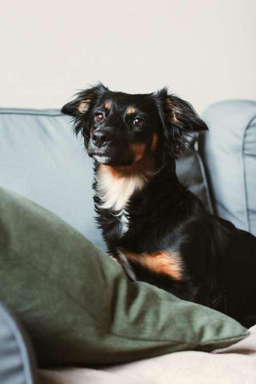 Mixed breed dog lying on the sofa 9