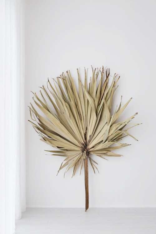 Big dried palm leaf