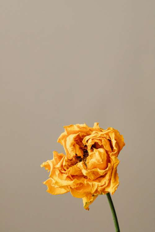 Dried flowers and leaves - still life backgrounds