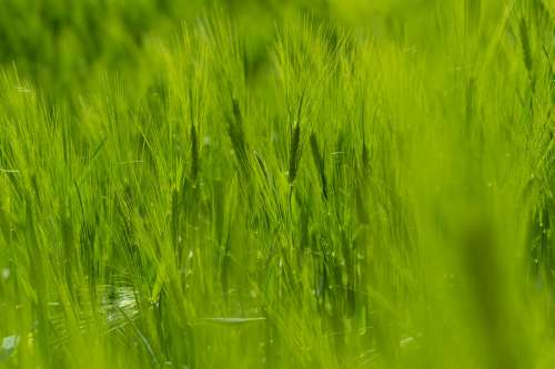Macro View Of Vibrant Green Grass In Focus Photo