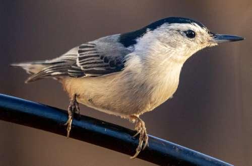 Close Up Perched Bird Free Photo