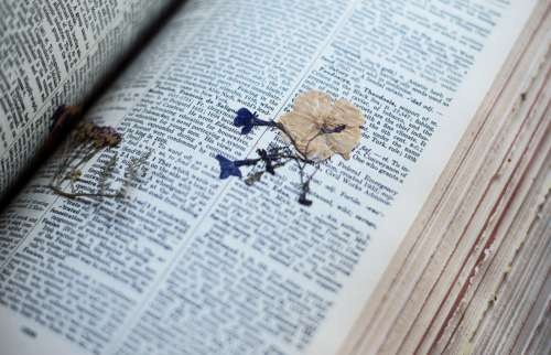 A Pressed Flower In The Pages Of An Old Dictionary Photo